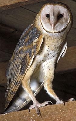 Project Beak Adaptations Feet Catching Prey